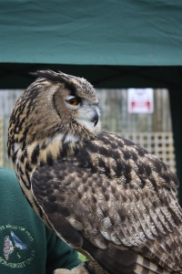 Owl Day at Brimsmore Gardens