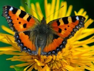 The Gardens Group - butterflies