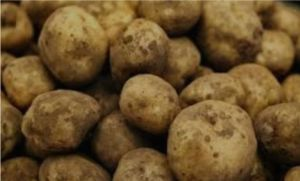 The Gardens Group - Charlotte Seed Potatoes
