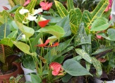 Houseplants 2